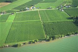 Weinanbaugebiet in Deutschland