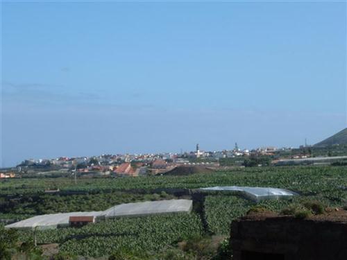 Gemeinde Buenavista - Bild 2