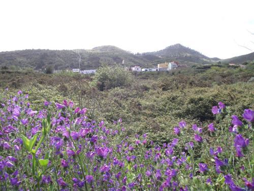 Gemeinde El Tanque - Bild 1
