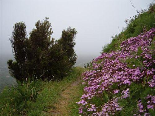 schöne Blumen auf Teneriffa