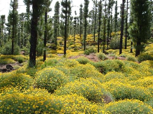 Gelbe Blumen bei Arenas Negras