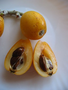 Nispero Frucht