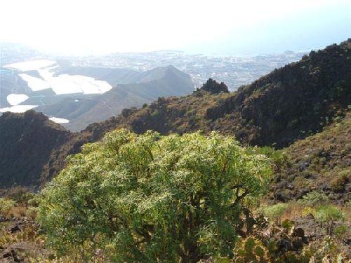Blick vom Mesa del Conde
