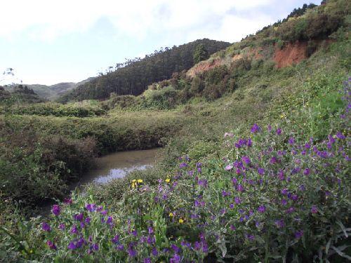 Kleiner Teich bei Los Erjos am Beginn der Wanderung